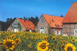 Wohnen im Wendland - Wohnungen Künstlerateliers Praxisräume Wohnen im Rundlingsdorf - Immobilien Wendland