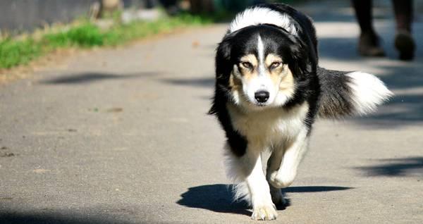 Hundeführerschein für Niedersachsen in der Lüneburger Heide
