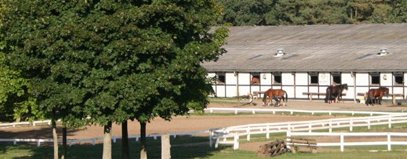 Riding school facilities
